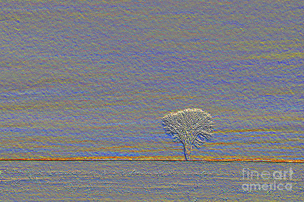Photograph - Winter Tree by Jim West