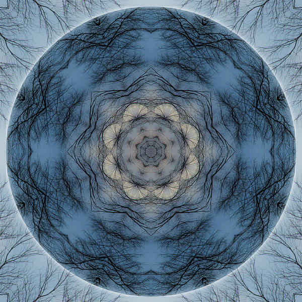 Photograph - Winter Tree Mandala 1 by Beth Sawickie