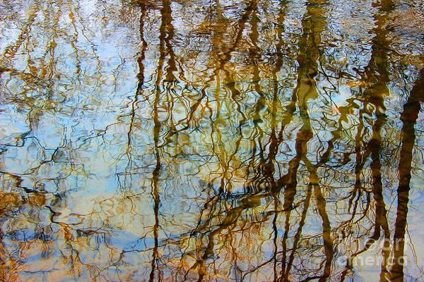 Photograph - Winter Tree Reflections by Karen Adams