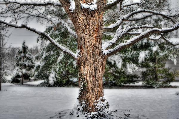 Photograph - Winter Tree by Robert FERD Frank