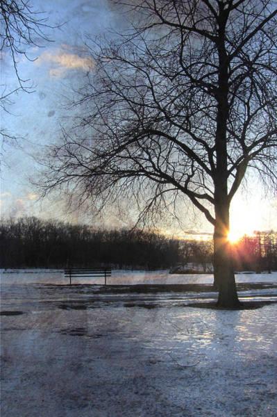 Park Bench Digital Art - Winter Tree Sunset by Anita Burgermeister