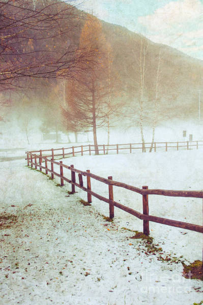 Photograph - Winter Tree With Fence by Silvia Ganora
