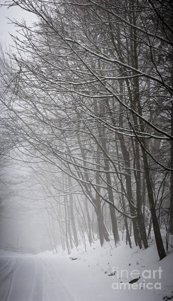 Photograph - Winter Trees Along Snowy Road by Elena Elisseeva
