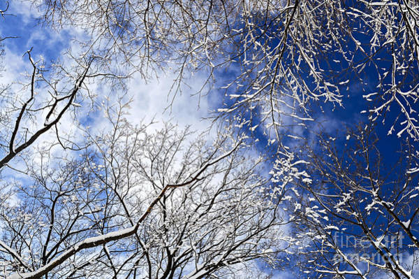 Photograph - Winter Trees And Blue Sky by Elena Elisseeva