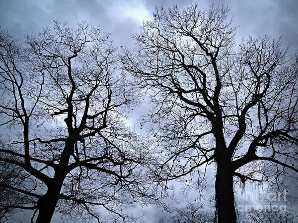 Leafless Tree Wall Art - Photograph - Winter Trees by Elena Elisseeva