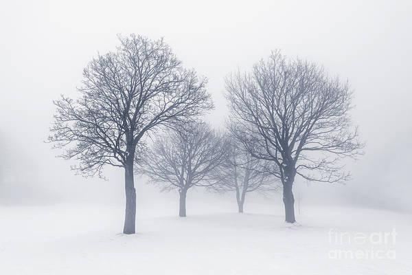 Wall Art - Photograph - Winter Trees In Fog by Elena Elisseeva
