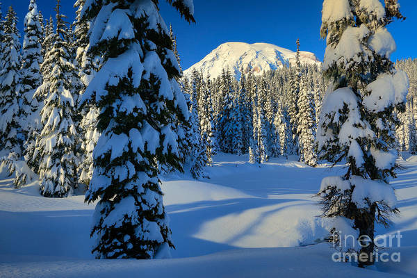 Snowshoe Photograph - Winter Trees by Inge Johnsson