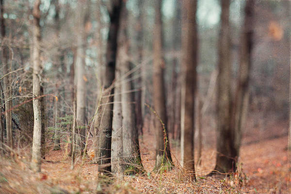 Fall Photograph - Winter Trees by Kim Fearheiley