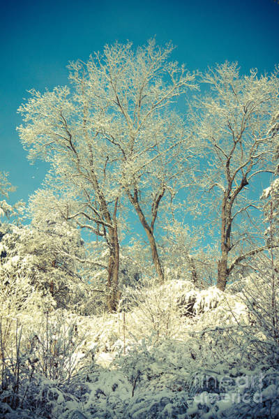 Wall Art - Photograph - Winter Trees by Lena Auxier