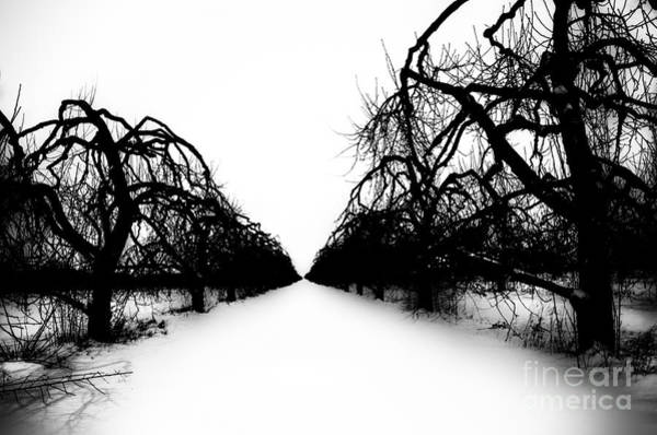 Photograph - Winter Trees by Michael Arend