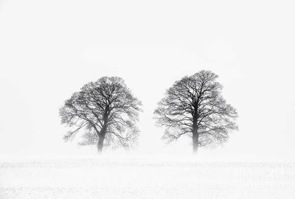 Photograph - Winter Pine Trees by Tim Gainey