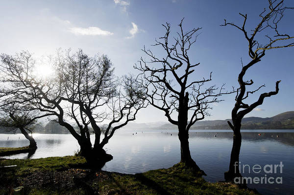 Ullswater Photograph - Winter Trees Ullswater by Colin Woods