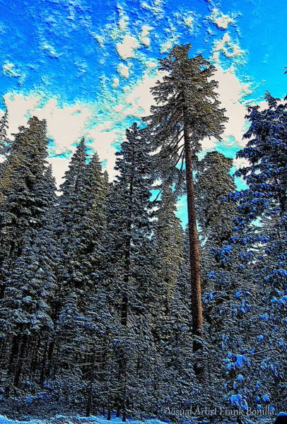 Digital Art - Winter Trees by Visual Artist Frank Bonilla