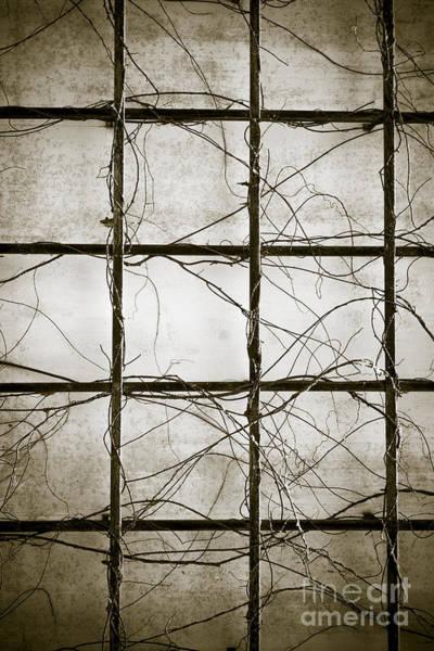 Photograph - Winter Trellis by Edward Fielding
