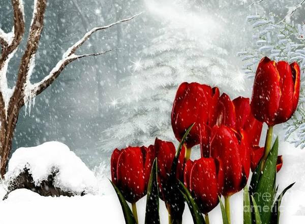 Mixed Media - Winter Tulips by Morag Bates