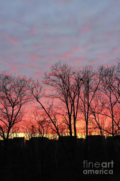 Photograph - Winter Twilight  by Karen Adams
