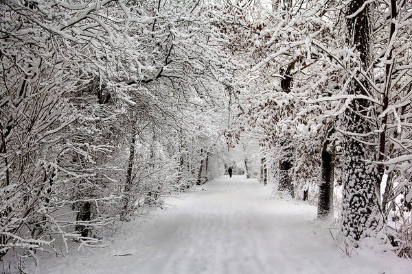 Photograph - Winter Walk In Fairytale  by Annie Snel