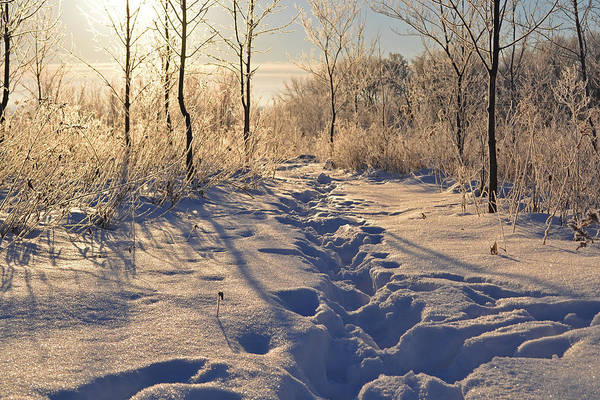 Rockville Photograph - Winter Walk by Jodi Pflepsen