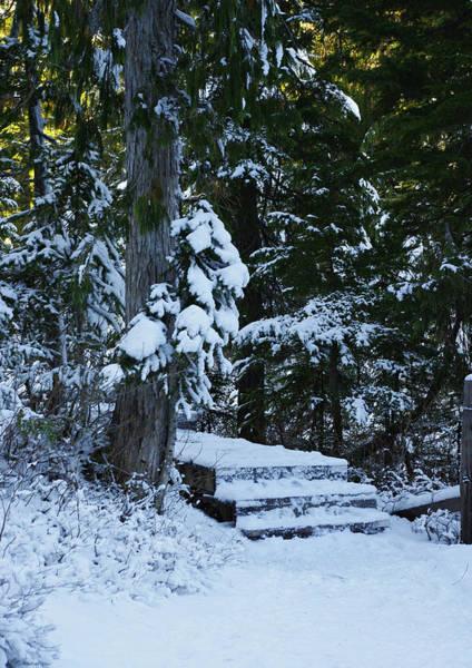Photograph - Winter Walk by Marilyn Wilson