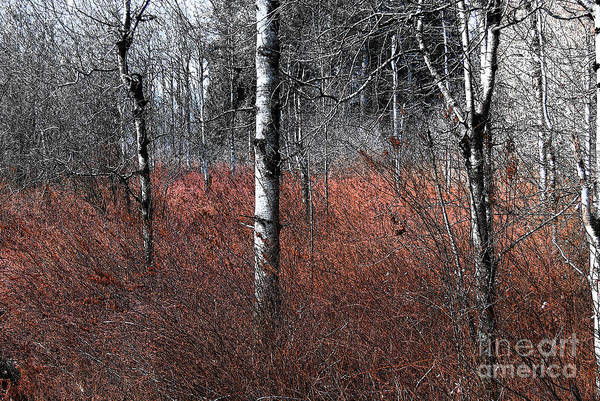 Photograph - Winter Wetland I by Jani Freimann