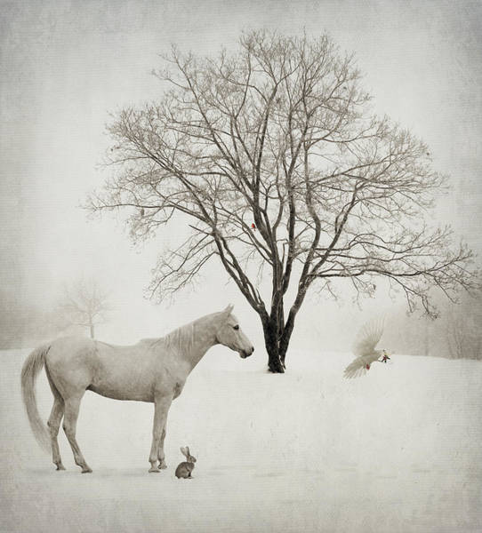 Snowfield Photograph - Winter Wishes by Laura Palazzolo