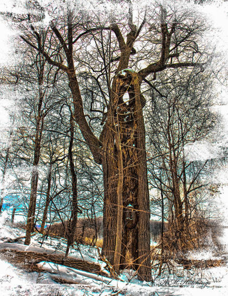 Wall Art - Photograph - Winter Wolf Tree by Keith Hutchings
