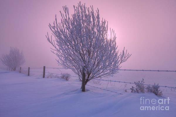 Willow Photograph - Winter Wonder Land by Dan Jurak