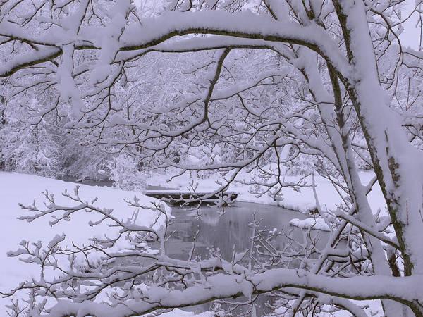 Flake Photograph - Winter Wonderland 2 by Mike McGlothlen
