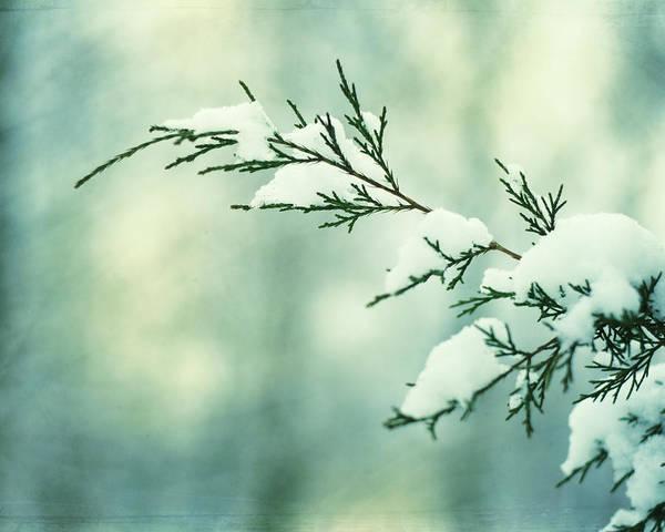 Wall Art - Photograph - Winter Wonderland by Carolyn Cochrane