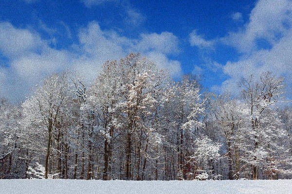 Photograph - Winter Wonderland by Lorna R Mills DBA  Lorna Rogers Photography