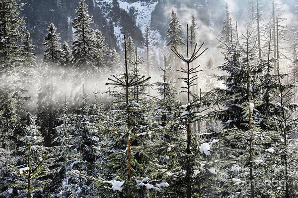 High Tatras Wall Art - Photograph - Winter Wonderland  by Mariola Bitner