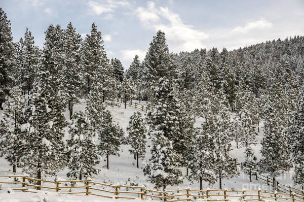 Photograph - Winter Wonderland by Sue Smith
