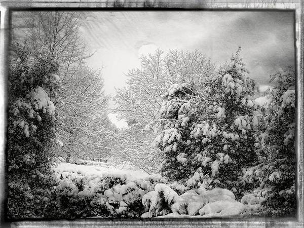 Winter Wonderland With Filmic Border Art Print