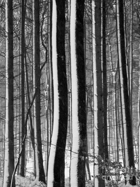 Photograph - Winter Woodlands 2 by Heiko Koehrer-Wagner