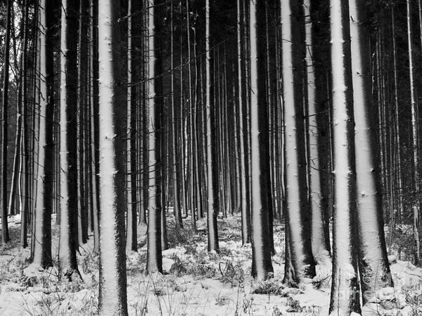 Photograph - Winter Woodlands by Heiko Koehrer-Wagner
