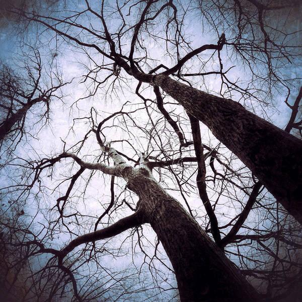 Photograph - Winter Woods by Natasha Marco