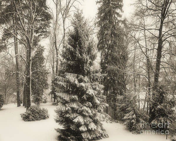 Photograph - Winter Zauber 02 by Edmund Nagele