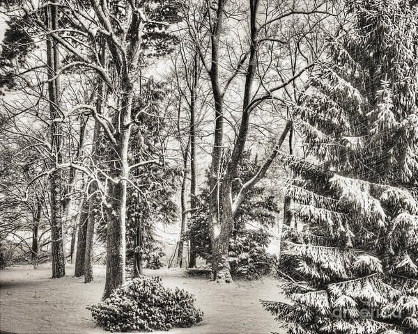Photograph - Winter Zauber 03 by Edmund Nagele
