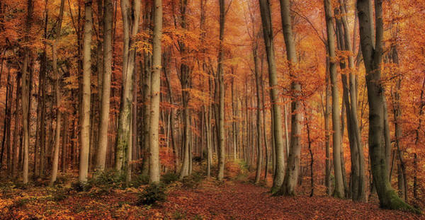 Orange Wood Photograph - Winter\'s Soon To Come by Norbert Maier
