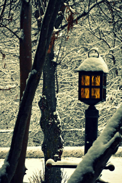 Photograph - Wintered Lantern by Cyryn Fyrcyd