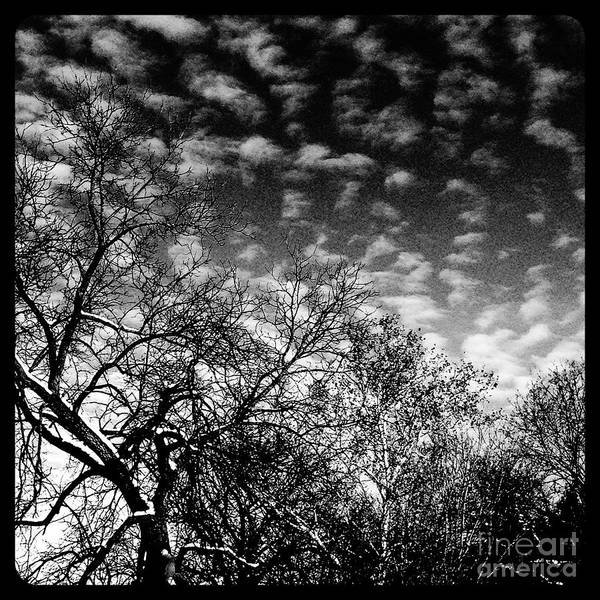 Photograph - Winterfold - Monochrome by Frank J Casella