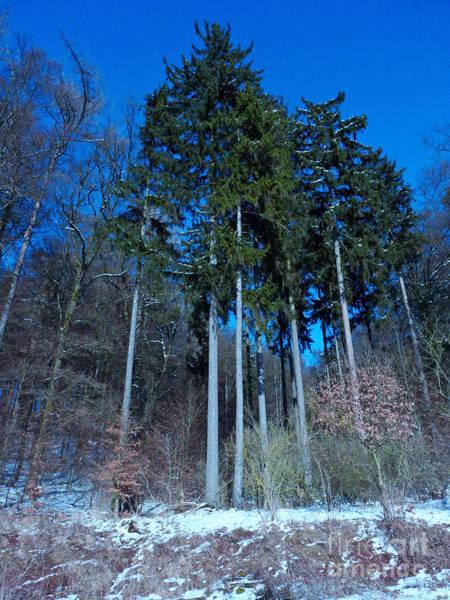 Winterforest Art Print