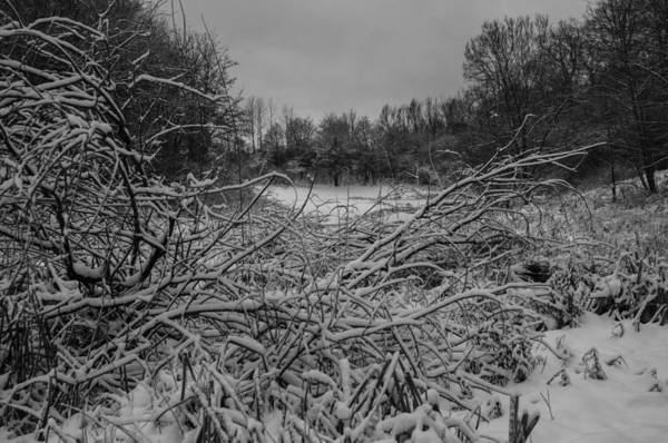 Photograph - Winterforest by Miguel Winterpacht