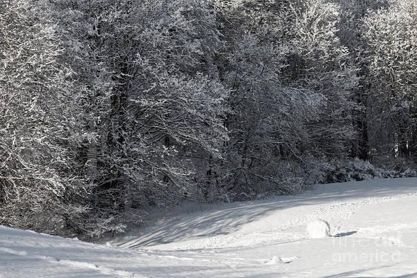 Photograph - Winterjoy by Lutz Baar