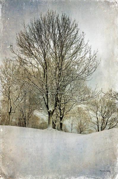 Photograph - Winterly Peace by Randi Grace Nilsberg