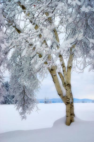 Winter's Dream Art Print