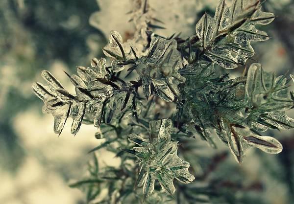 Photograph - Winter's Freeze by Candice Trimble