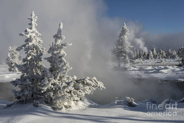 Wall Art - Photograph - Winter's Glory - Yellowstone National Park by Sandra Bronstein