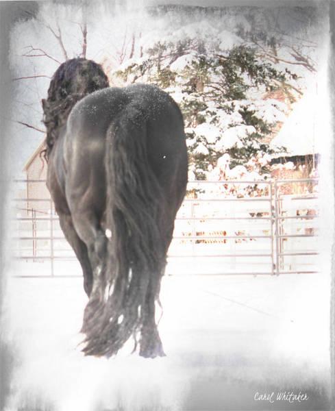 Photograph - Winter's Grace by Carol Whitaker