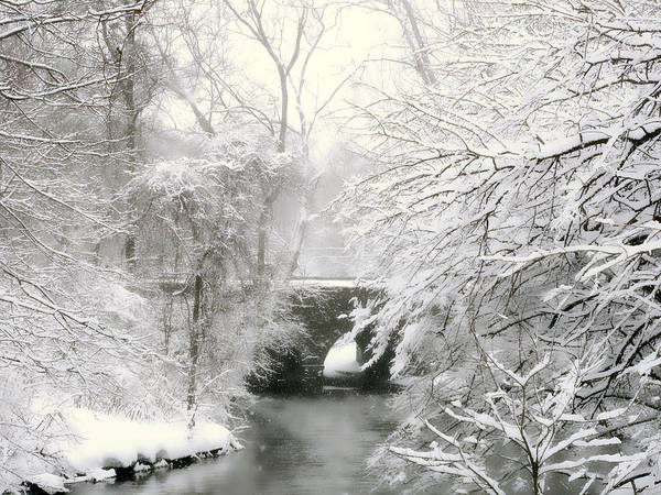 Wall Art - Photograph - Winter's Grand Finale by Jessica Jenney